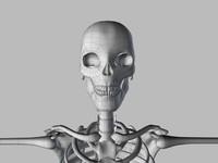maya human skeleton base