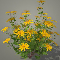 3d model helianthus