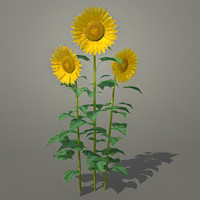 3d sunflower model