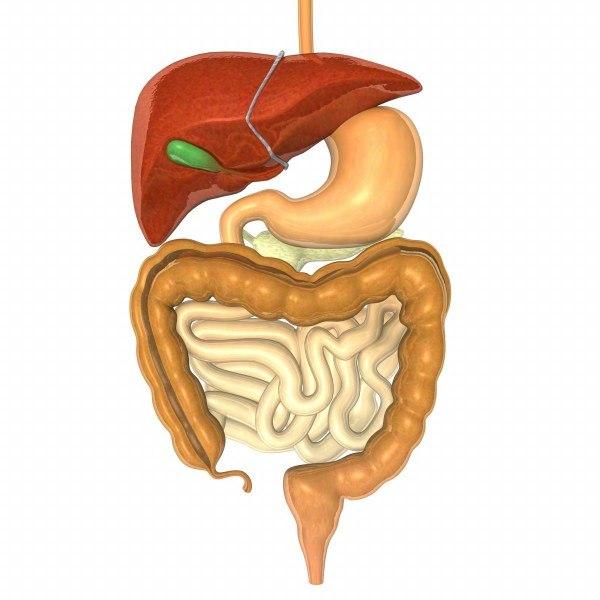 digestive1_render.jpg