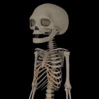 fetus skeleton 3d max