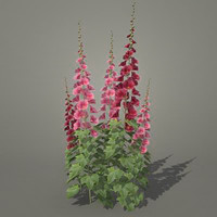 3d model flowers malva
