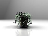Plants_05