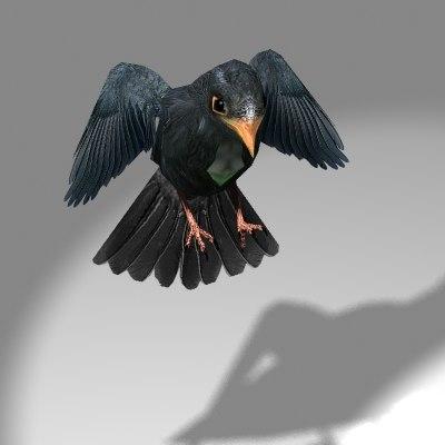 blackbird3.jpg