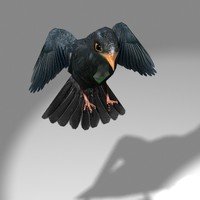 Blackbird 3D models