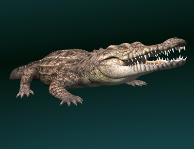 crocodile-pic19.jpg