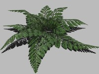 Low-poly Fern