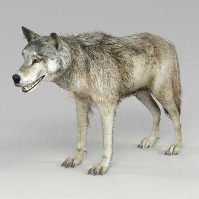 wolf_t_1.jpg