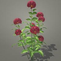 3d flowers dahlia model