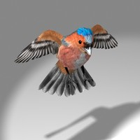 3d cute songbird chaffinch bird flying model