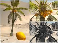 Coconut full 3D.rar
