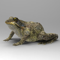 Frog_2