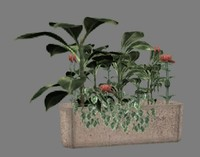 low-polygon-plant plant flower 3d max