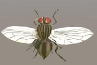 fly 3d model