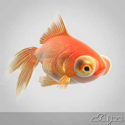 Fish_render1_uni.jpg