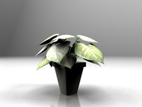 maya small potted plant