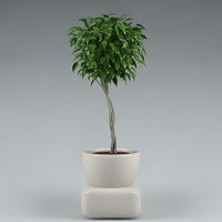 plant with flowerpot_08