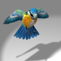 Songbird (Blue tit)