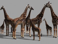 Superb Low-Poly Giraffe