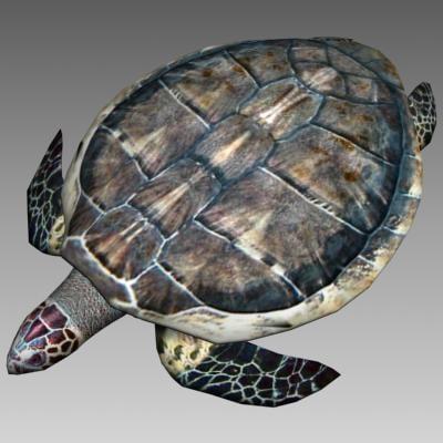 turtle_render_1.jpg
