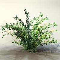 pc bush 3d model