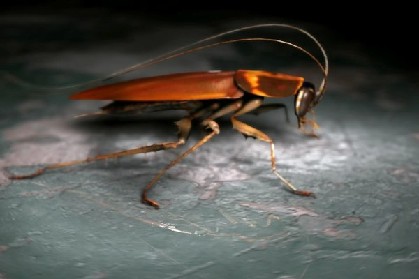 3ds max roach bug insect - Roach... by eradek