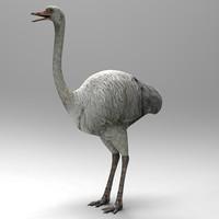 ostrich bird lwo
