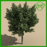 small tree 3d max