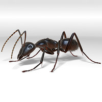 3d ant carpenter camponotus model