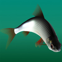 maya fish rutilus