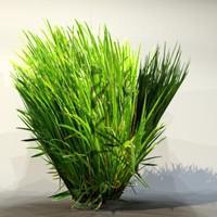 pc grass 3d max