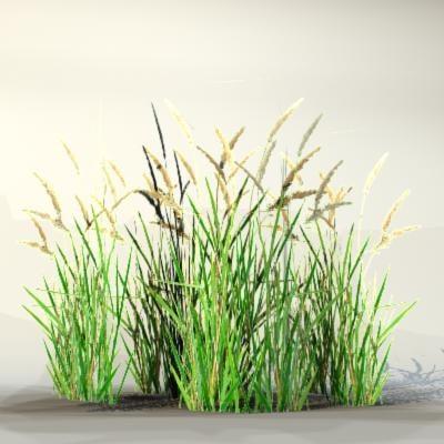 Grass_12_02.jpg