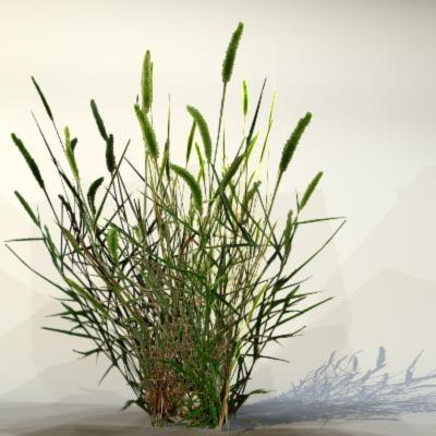 Grass_20_04.jpg