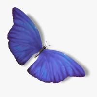 3d morpho blue butterfly wings model