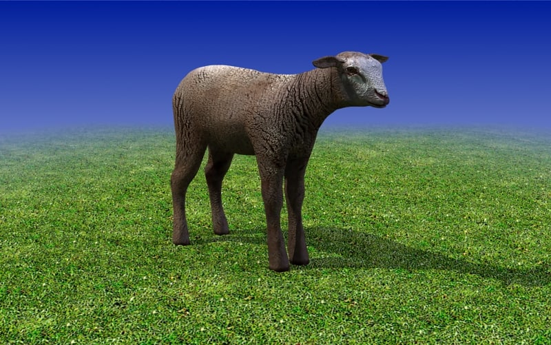 sheep_calf_Brown_3dmodel_sample01.jpg