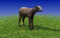brown calf sheep 3d model