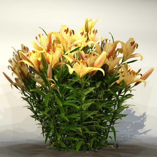 Flower_020_1.jpg