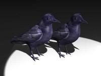 max crow