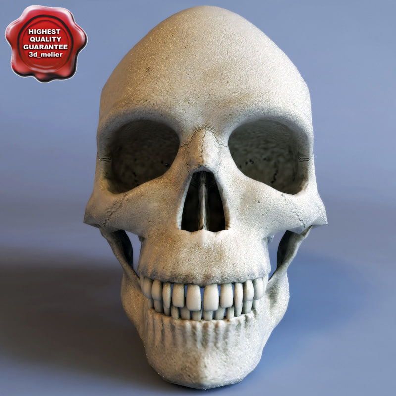 Skull_0.jpg