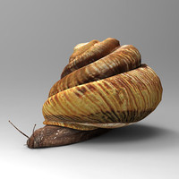 maya snail