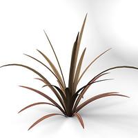 phormium tenax sundowner plant 3d model