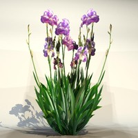 3d pc flower