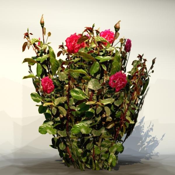 Flower_043_1.jpg