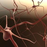 Synapse02.max