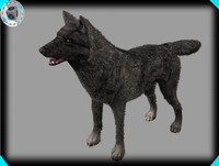 Black Wolf (animals)