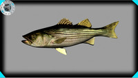 Striped Bass (fish)
