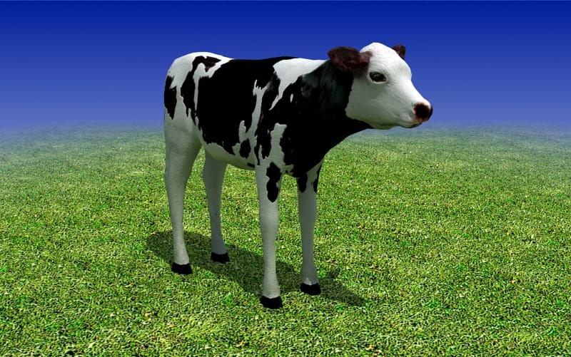 sample_01_calf_cow_3d_model_main.jpg