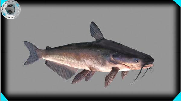 Cat Fish (fish)