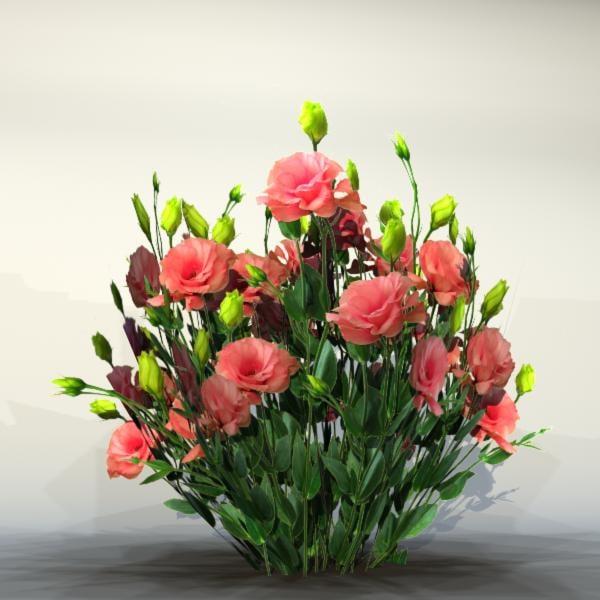 Flower_038_1.jpg