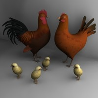 3d hen cock chicken